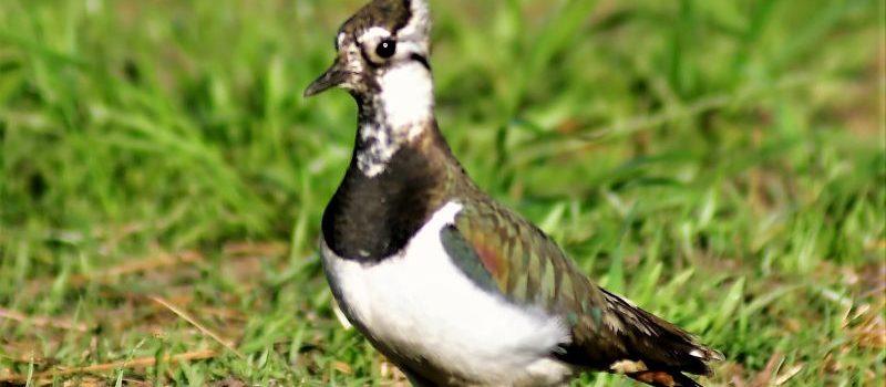 Wiosenne sprawy ptaków