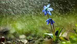 Deszczyk wiosenny