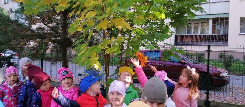 Święto Drzewa w grupie VIII
